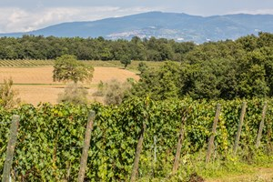 The working wine farm and views of Umbria