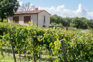 The granary barn nestles amongst the vines on Cantina Goccia's working wine farm